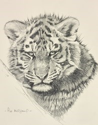 Siberian Tiger Cub Sketch by Pip McGarry -  sized 9x11 inches. Available from Whitewall Galleries